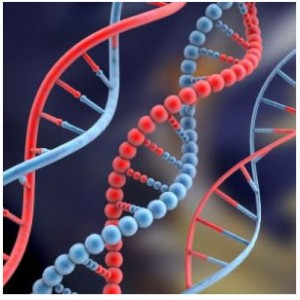 There is a link between genes and addiction, the level of a specific genotype can influence the severity of addiction due to decreased gray matter density.