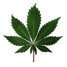 Marijuana lowers dopamine in the brain and affects motivation