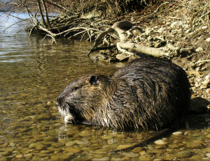 Should you chose inpatient or outpatient detox in New Orleans? Don't avoid drug or alcohol detox like it's a canal filled with giant nutria.